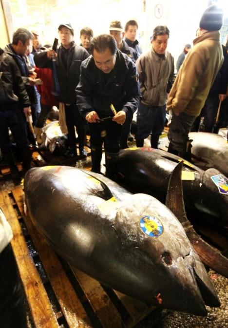 bluefin tuna tokyo