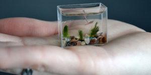 The Smallest Aquarium In The World