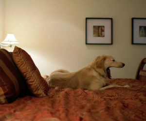 hotel room dog