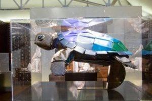 LV turtle Honolulu