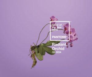 Pantone Radiant Orchid