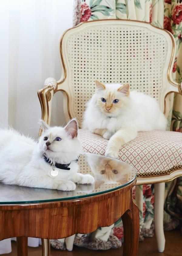 Le Bristol Paris cats