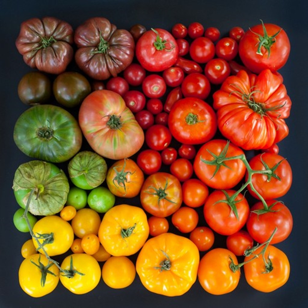 Photographs Of Color Coded Food And Plants By Emily Blincoe 2