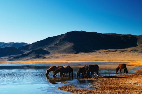 Mongolia 2016 generic AFP