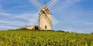 French Wines Find Favor in China Again