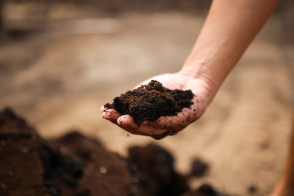 Energy-dense used Nespresso coffee grounds are mixed into the compost, which is then left to ferment for 6 months before being used at Quan Fa Organic Farm.