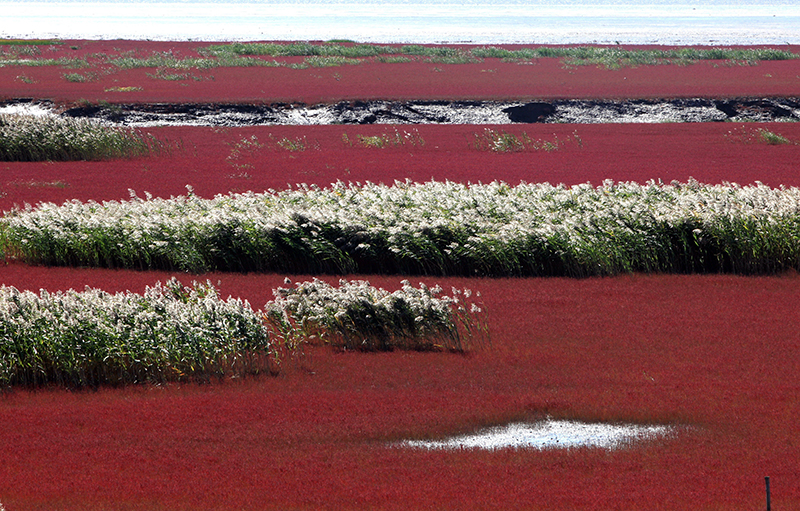 Red Beach of Panjin