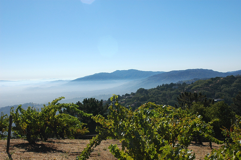The Monte Bello vineyard