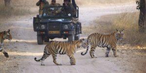 Jacada Travel Debuts Bespoke India Journeys