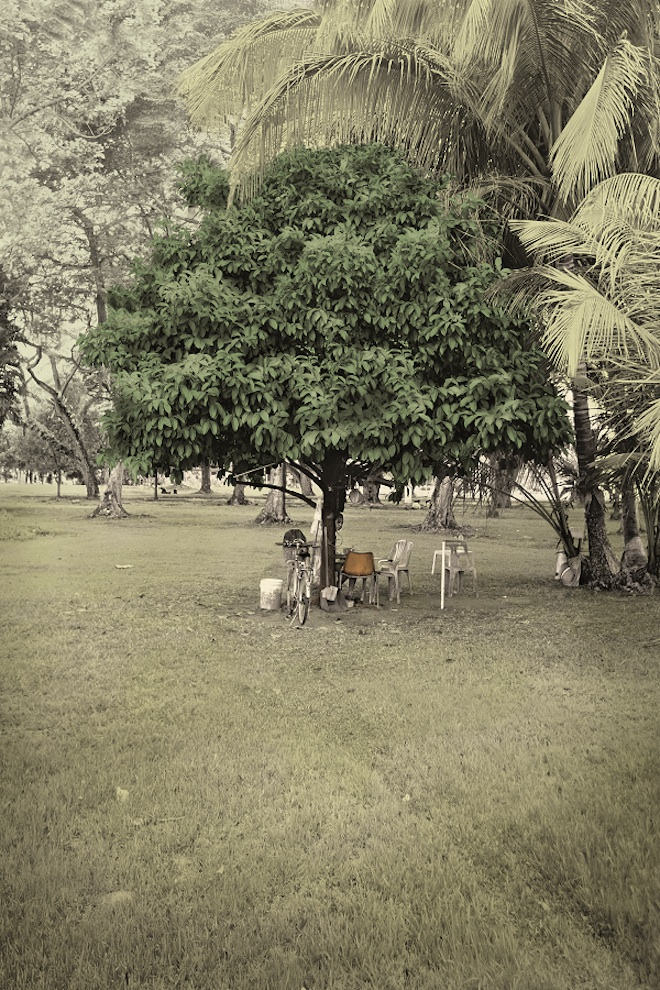 'Very Old Tree - Mangosteen Tree, Old Kallang Airport (detailed view), 2015, Robert Zhao