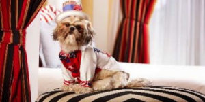 It's a dog's life at luxury hotel for pampered pooches