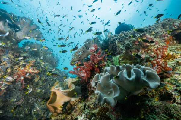 The area's marine diversity makes it 'the Amazon' of the underwater world'